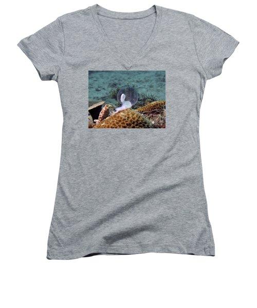 Women's V-Neck T-Shirt (Junior Cut) featuring the photograph Birth Of Marine Cuttlefish by Sergey Lukashin