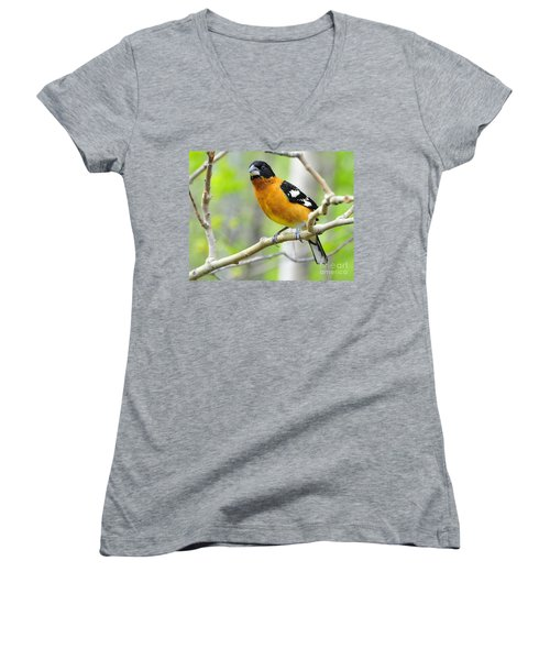 Blach-headed Grosbeak Women's V-Neck (Athletic Fit)
