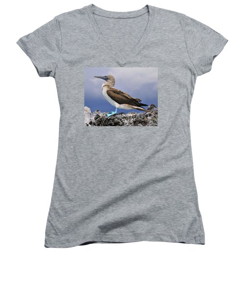 Blue-footed Booby Women's V-Neck T-Shirt (Junior Cut) by Tony Beck