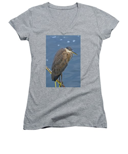 Blue Herron Women's V-Neck T-Shirt (Junior Cut) by Jim Thompson