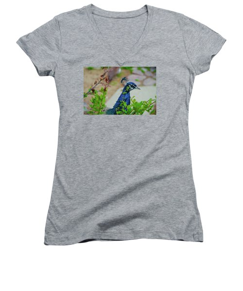 Women's V-Neck T-Shirt (Junior Cut) featuring the photograph Blue Peacock Green Plants by Jonah  Anderson