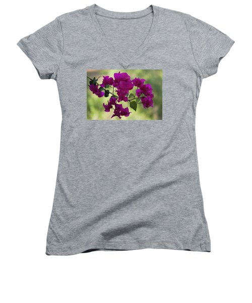 Bougainvillea Women's V-Neck (Athletic Fit)