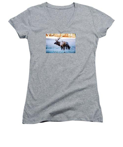 Bull Elk And Cow Women's V-Neck T-Shirt (Junior Cut) by Paul Mashburn