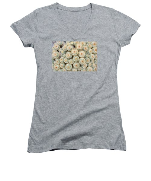 Cactus 35 Women's V-Neck T-Shirt