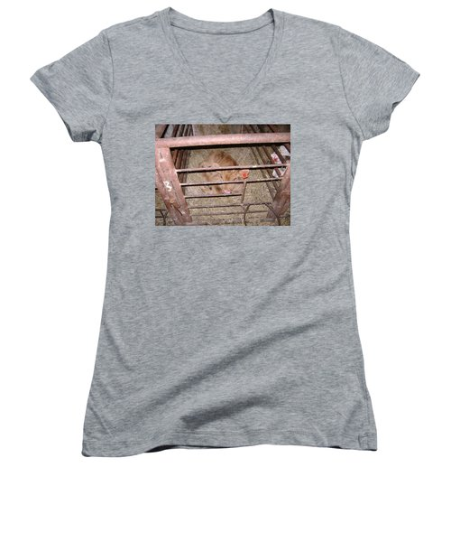 Calf Women's V-Neck T-Shirt