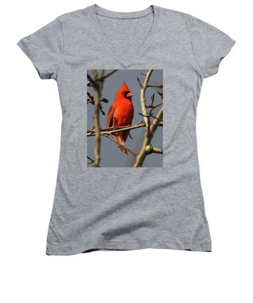 Cardinal Women's V-Neck (Athletic Fit)