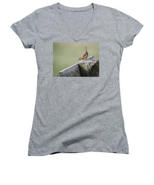 Carolina Wren Two Women's V-Neck T-Shirt (Junior Cut) by Heather Applegate