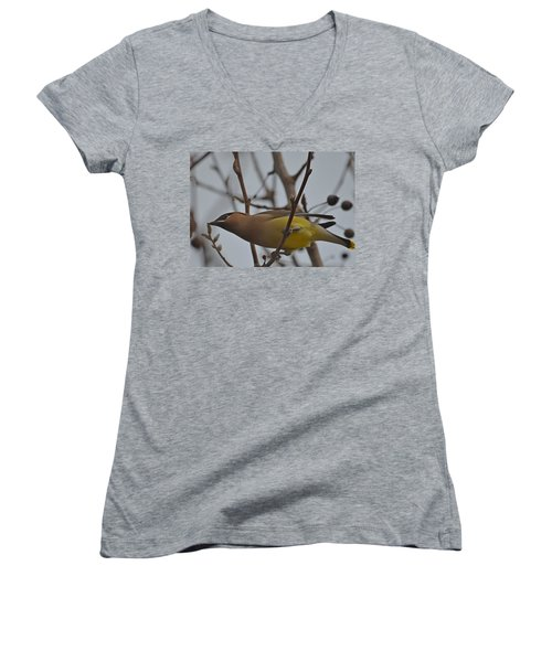 Women's V-Neck T-Shirt (Junior Cut) featuring the photograph Cedar Waxwing Feasting In Foggy Cherry Tree by Jeff at JSJ Photography