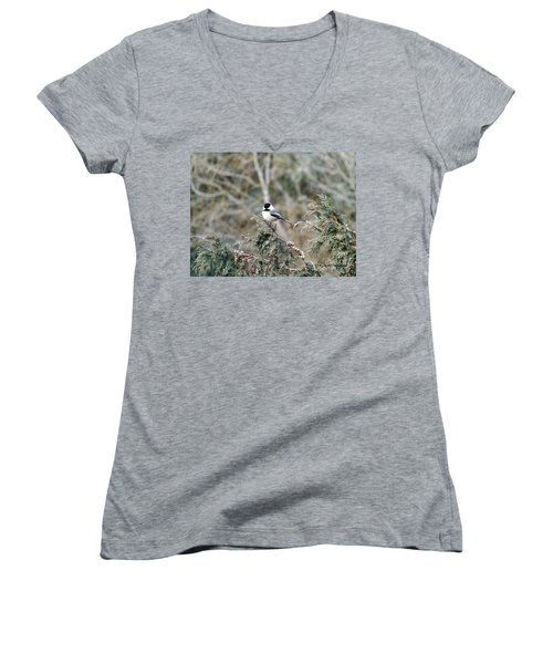 Women's V-Neck T-Shirt (Junior Cut) featuring the photograph Chickadee In Cedar by Brenda Brown