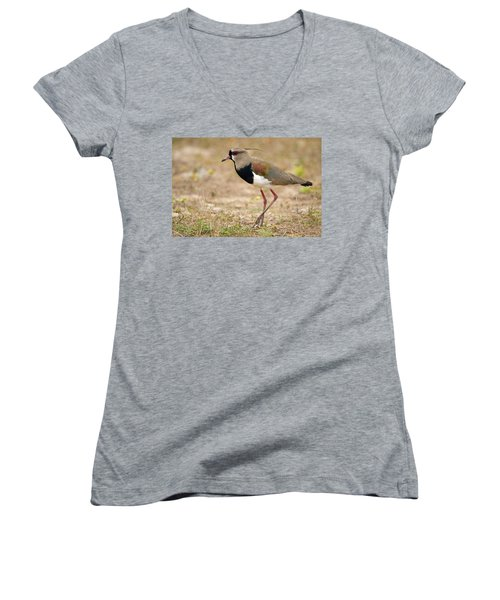 Close-up Of A Southern Lapwing Vanellus Women's V-Neck T-Shirt
