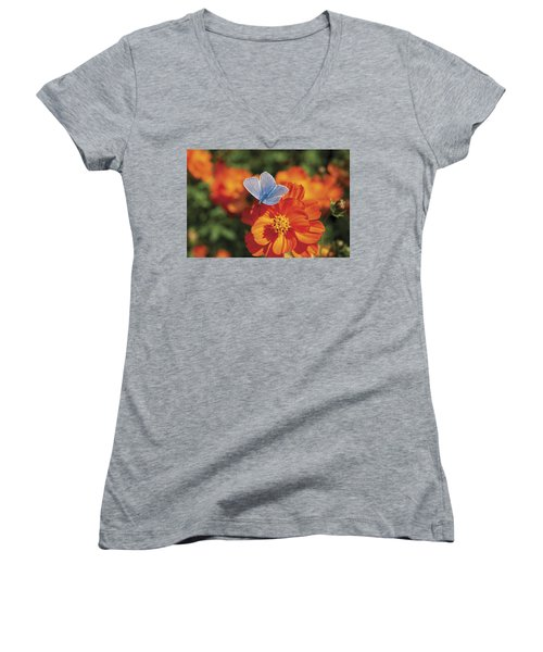 Women's V-Neck T-Shirt (Junior Cut) featuring the photograph Common Blue Butterfly by Lana Enderle