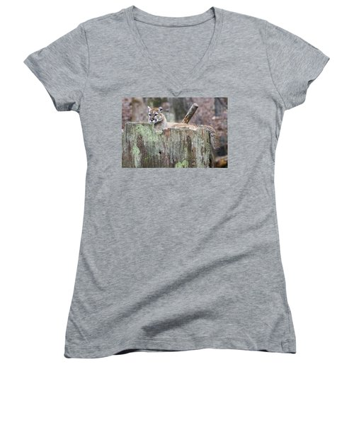 Cougar On A Stump Women's V-Neck T-Shirt (Junior Cut) by Chris Flees