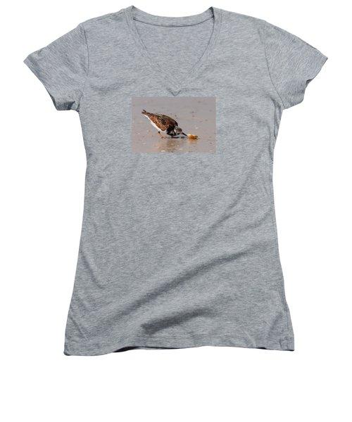 Curious Turnstone Women's V-Neck T-Shirt (Junior Cut) by Paul Rebmann