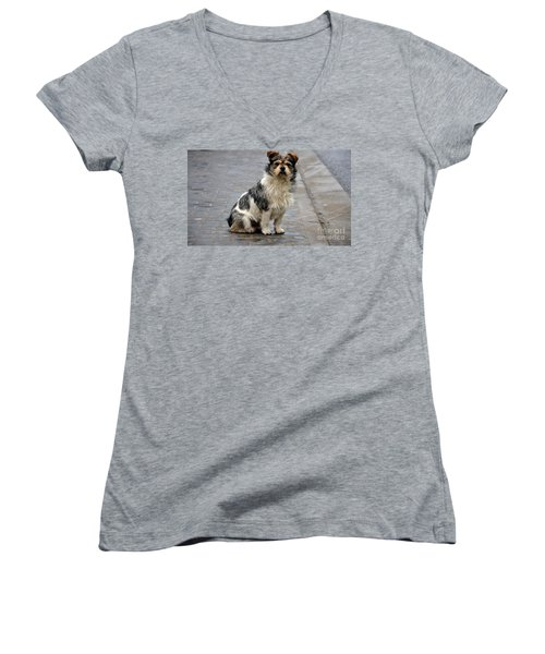 Cute Dog Sits On Pavement And Stares At Camera Women's V-Neck T-Shirt