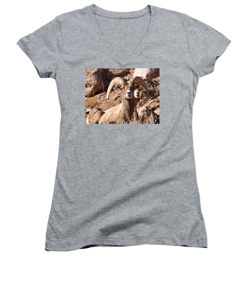 Desert Bighorn Sheep Women's V-Neck