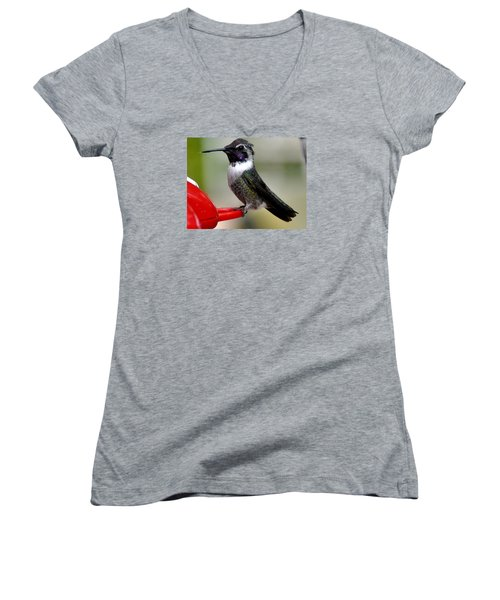 Women's V-Neck T-Shirt (Junior Cut) featuring the photograph Male Anna On Feeder Perch Posing by Jay Milo