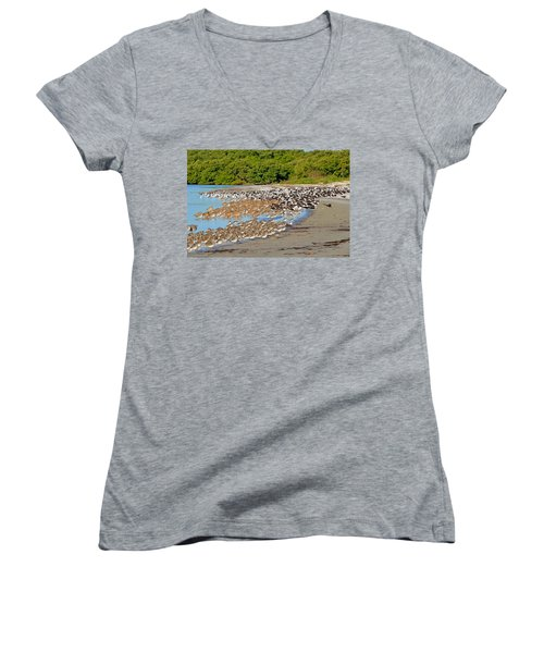 Women's V-Neck T-Shirt (Junior Cut) featuring the photograph Four Species Of Birds At Roost On Tampa Bay Beach by Jeff at JSJ Photography