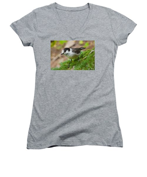 Gray Jay On Fir Tree Women's V-Neck (Athletic Fit)