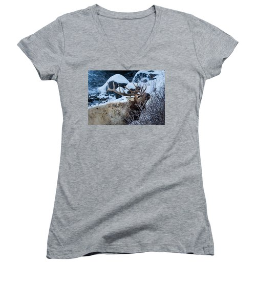 Grazing Elk Women's V-Neck T-Shirt