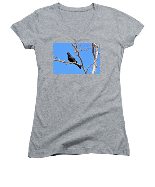 Great-tailed Grackle On A Sunny Spring Day Women's V-Neck T-Shirt (Junior Cut) by Susan Wiedmann