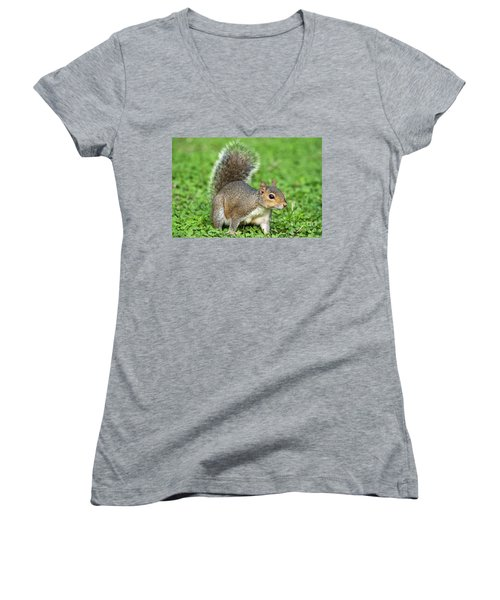 Women's V-Neck T-Shirt (Junior Cut) featuring the photograph Grey Squirrel by Antonio Scarpi