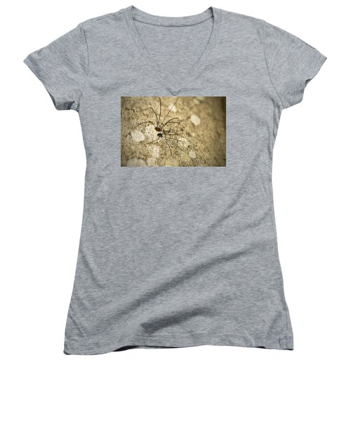 Women's V-Neck T-Shirt (Junior Cut) featuring the photograph Harvestman Spider by Chevy Fleet