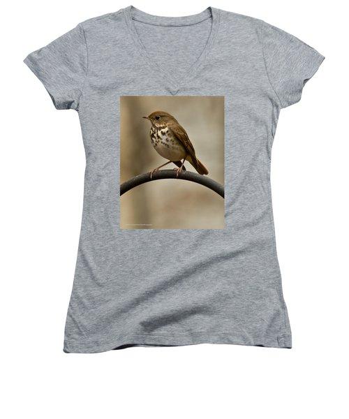 Women's V-Neck T-Shirt (Junior Cut) featuring the photograph Hermit Thrush by Robert L Jackson