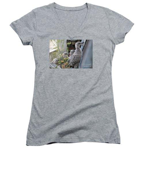 Herring Gull Chicks Women's V-Neck T-Shirt