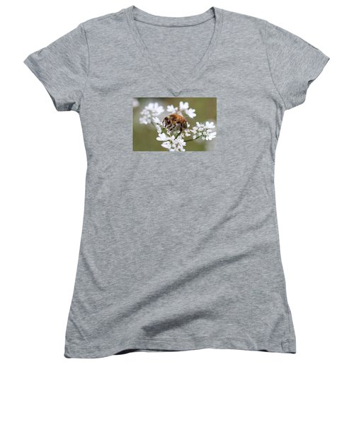 Honeybee On Cilantro Women's V-Neck T-Shirt (Junior Cut) by Lucinda VanVleck