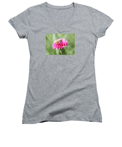 Honeybee On Pink Bachelor's Button Women's V-Neck T-Shirt (Junior Cut) by Lucinda VanVleck
