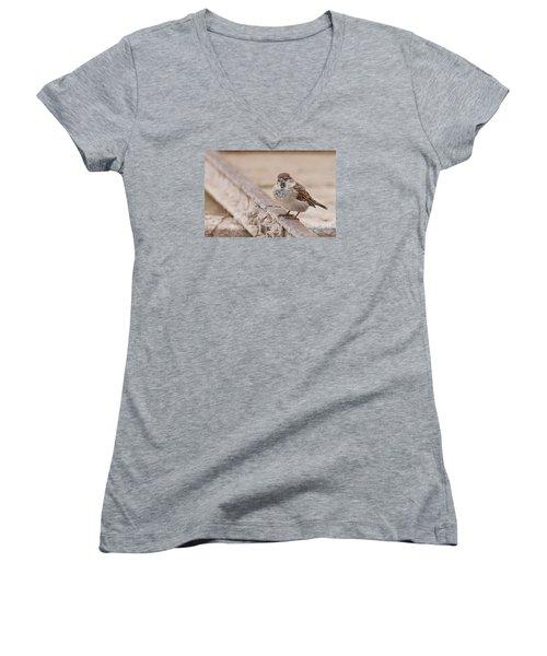 House Sparrow Women's V-Neck T-Shirt (Junior Cut) by Simona Ghidini