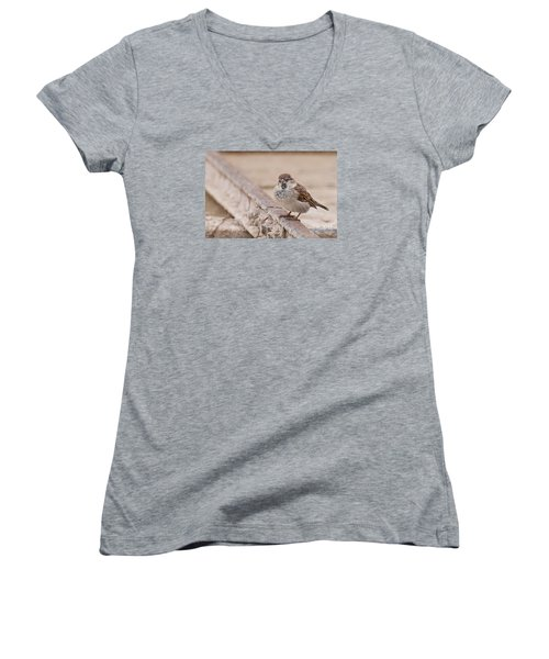 House Sparrow Women's V-Neck (Athletic Fit)