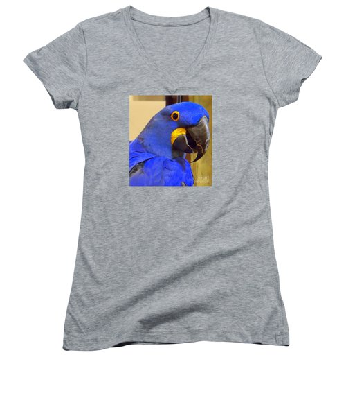 Hyacinth Macaw Portrait Women's V-Neck (Athletic Fit)