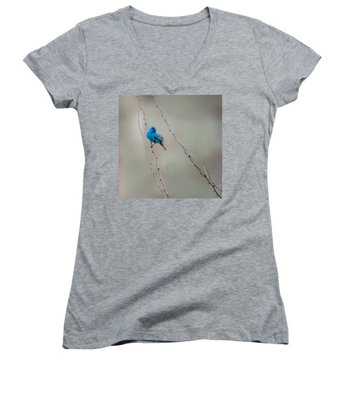 Indigo Bunting Square Women's V-Neck T-Shirt (Junior Cut) by Bill Wakeley