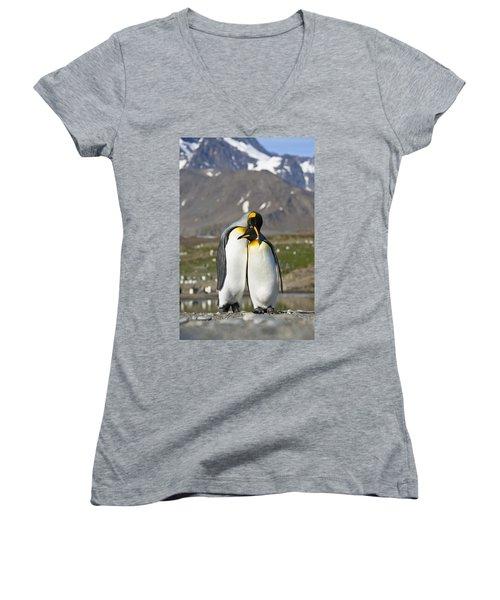 King Penguins Courting St Andrews Bay Women's V-Neck
