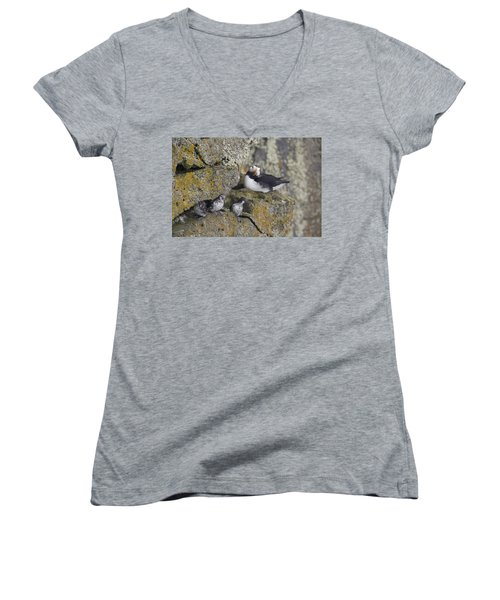 Least Auklets Perched On A Narrow Ledge Women's V-Neck (Athletic Fit)