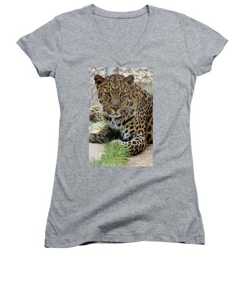Leopard Lounging 1 Women's V-Neck T-Shirt