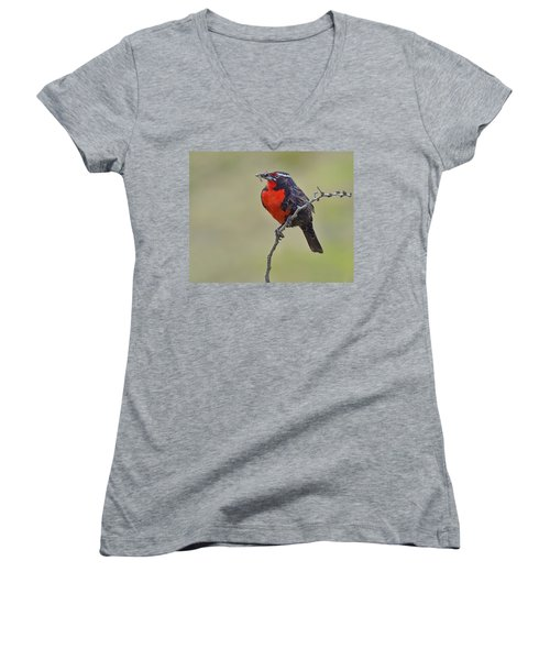 Long-tailed Meadowlark Women's V-Neck T-Shirt (Junior Cut) by Tony Beck