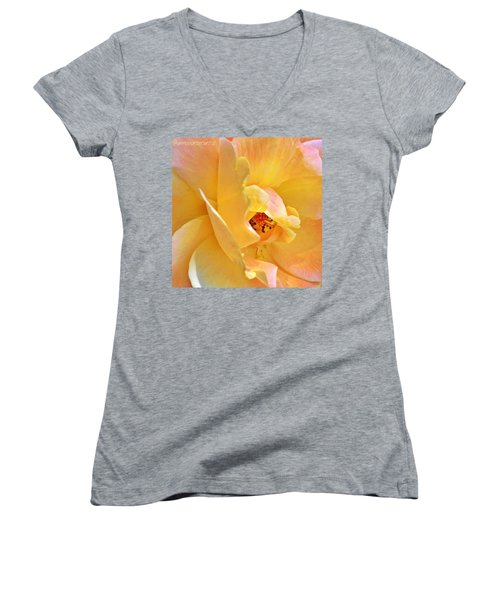 Lovely Yellow And Peach Rose Women's V-Neck T-Shirt