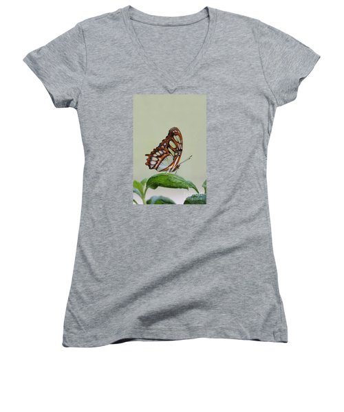 Women's V-Neck T-Shirt (Junior Cut) featuring the photograph Malachite Butterfly #5 by Judy Whitton