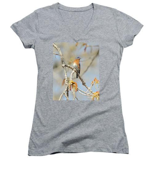 Male Bluebird In Budding Tree Women's V-Neck (Athletic Fit)