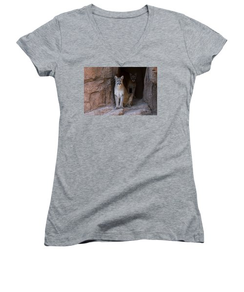 Women's V-Neck T-Shirt (Junior Cut) featuring the photograph Mountain Lion 1 by Arterra Picture Library