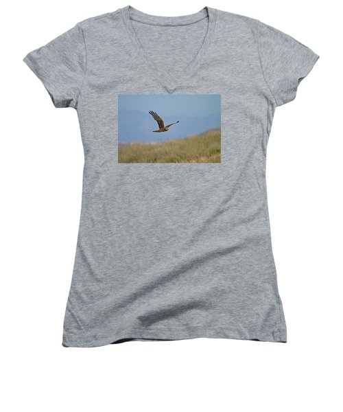 Northern Harrier In Flight Women's V-Neck T-Shirt (Junior Cut) by Duncan Selby