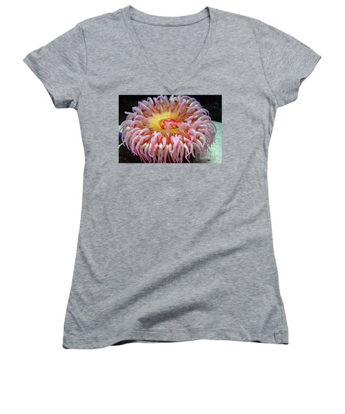 Women's V-Neck T-Shirt (Junior Cut) featuring the photograph Northern Red Anemone by Robert Meanor