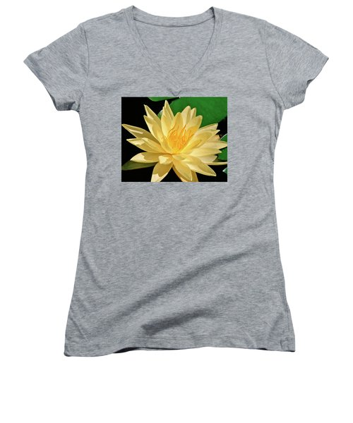 One Water Lily  Women's V-Neck T-Shirt (Junior Cut) by Ed  Riche