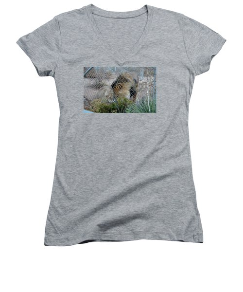 Out Of Africa Lions 4 Women's V-Neck (Athletic Fit)