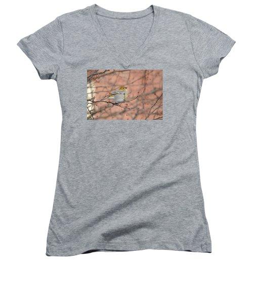 Women's V-Neck T-Shirt (Junior Cut) featuring the photograph Pine Grosbeak by James Petersen