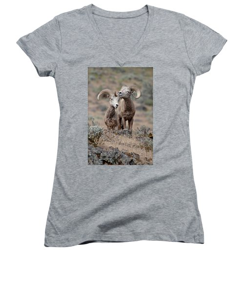 Women's V-Neck T-Shirt (Junior Cut) featuring the photograph Playfull Rams by Athena Mckinzie