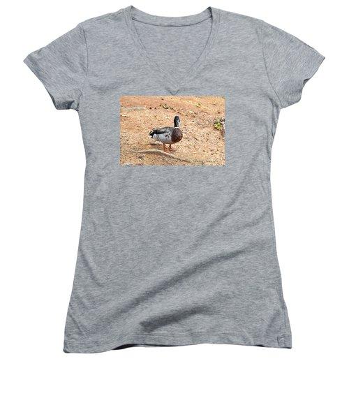 Women's V-Neck T-Shirt (Junior Cut) featuring the photograph Portrait Of An Alabama Duck 2 by Verana Stark