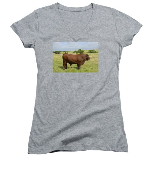 Red Angus Bull Women's V-Neck T-Shirt (Junior Cut) by Charles Beeler